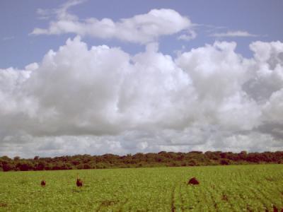 Brasil  – Latifúndio e Expansão